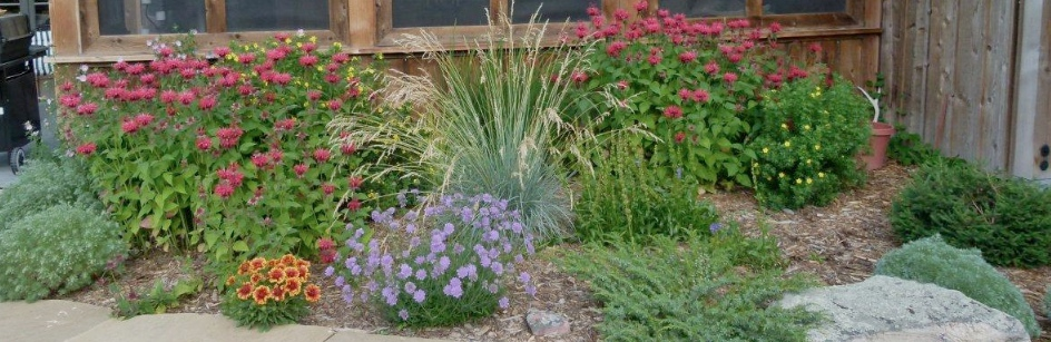 Perennial Garden in the Fall