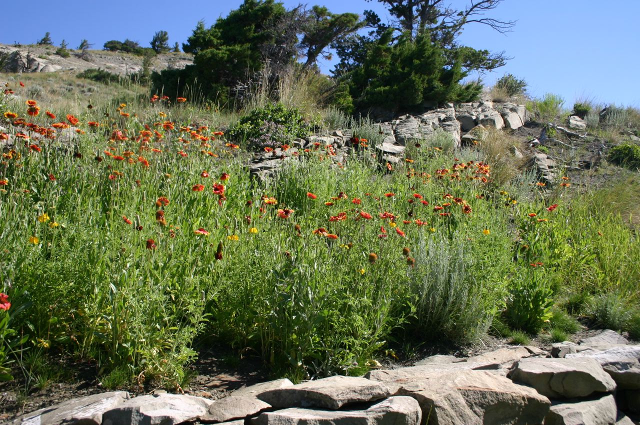 Native Wildflower Seed Mix